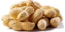 Cacahuete  Mani (Arachis hypogaea) calidad  15 Semillas seeds