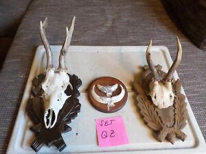 3 Hunting Trophies Roe Deer Antlers Wild Boar Weapons Tusks Wall Mount Set-QZ