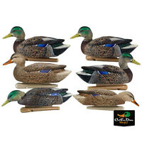 NEW ZINK AVIAN-X TOP FLIGHT EARLY SEASON MALLARD DUCK DECOYS 6 PACK FLOATING