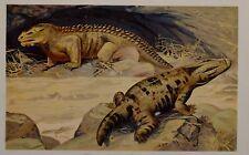c1900 TEDESCA STAMPA MASTODONSAURIS PREISTORICO DINOSAURO ANIMALE der Urwelt