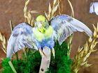 BD06 Taxidermy Parakeet Bird spread Dome oddities curiosities home decor fancy