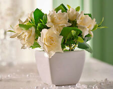 Unbranded Potted Rose Dried & Artificial Flowers