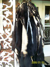 "Tanned Skunk Pelts, narrowstripes, well furred, 30""+ Northern Fur tnst30+sl"