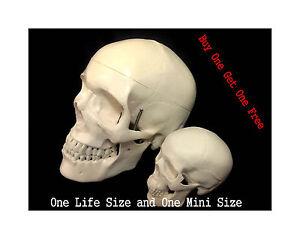 Professional Full Size Human+High Simulation Mini Size Classic Human Skull Model