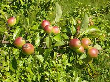 Deciduous Fruits