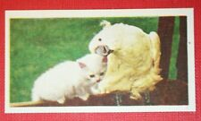 KITTEN & COCKATOO    Vintage Photo Card