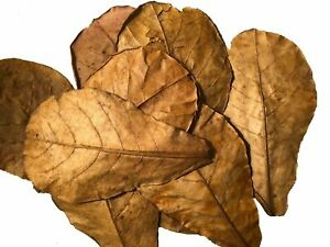 Dried Catappa Leaves (Almond) 500g ,Shrimp/Fish Aquarium Care -High Quality