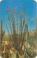 Old Chrome Postcard AZ D702 Cacti and Desert Flora of the Great Southwest Petley