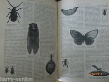 Humans Eating Insects Grubs New Menu Diet Food Old Victorian Photo Article 1900
