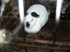 5 Pounds Rabbit Manure Compost Organic Fertilizer Harvested Beneath Cages