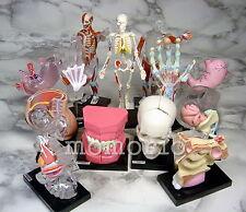 JAPAN Yujin FULL SET Human anatomy Body organ detail collection Figure Gashapon