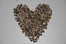 100 Moringa Oleifera Samen, Meerrettichbaum, Behen, Baum des Lebens,Miracle Tree