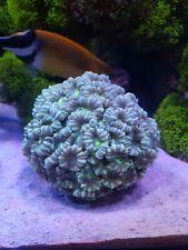 Starter Coral Pack