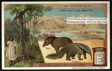 Venezuela Scenes Puerto Cabello Anteater Tapir c1905 Trade Ad Card