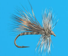 Quill Body Caddis, 6 pcs. size 14