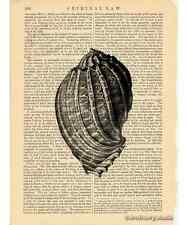 Sea Snail Shell #2 Art Print on Antique Book Page Vintage Illustration Seashell