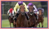 Pythagorean Horse Racing System   3 Month Trial, 78.45 points profit!