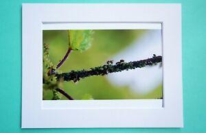 Photo Art Print VanagART New A5 Format Paper Cardboard Ant Bugs Grass Green Gift