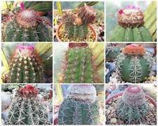 Melocactus Mixed Variety Mix cacti rare cactus globular turk's seed 1000 Seeds