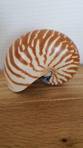 coquillage nautile