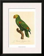 Barraband Parrot No. 86 Framed Art Poster Print by Jacques Barraband, 21x27