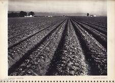 "Héliogravure - 1935 - "" Lettuce ranch "" by Edward Weston"