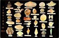 Sea Shells Names of Florida Gulf of Mexico Postcard Unused (21164)