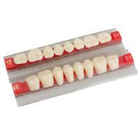 Dental Acrylic Resin Denture Back Posterior Teeth Upper Lower Shade A3 96Pcs FDA