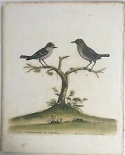 Eleazar Albin Common & Crested Wren Hand Colored 1730s Copper Etching