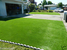 Lawn Grass Seeds Runner Grass 1000 Seeds