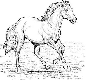 Horse Unmounted Rubber Stamp - 7087