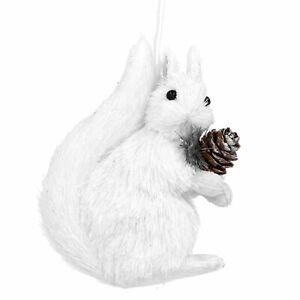White Bristle Squirrel