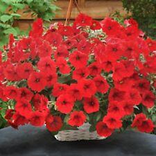 25 Pelleted Seeds Opera Supreme Red Trailing Petunia Seeds
