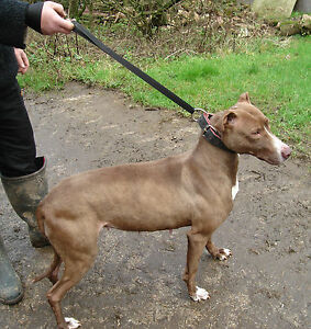 SL11 Quick Release Slip Lead Lurcher/Greyhound Lamping/Racing/Coursing
