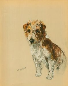 JACK RUSSELL WIRE FOX TERRIER OLD VINTAGE 1930'S COLOUR DOG ART PRINT KF BARKER