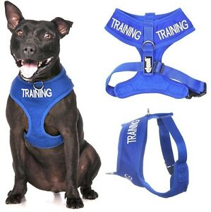 TRAINING Blue Front Back Ring Padded Waterproof Non Pull Dog Harness or Lead New