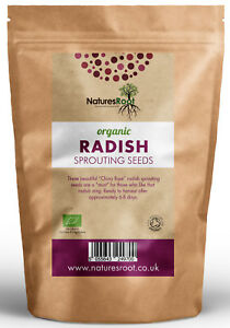 Organic Radish Sprouting Seeds China Rose Superfood Vegetable Microgreen Sprouts