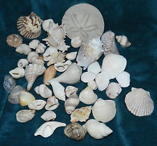 NICE MIXED LOT OF SEA SHELLS FOR NAUTICAL CRAFTS! B