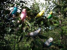 6 Realistic PARAKEET Bird Replica PROP FURRY ANIMAL Toy ck1001 FREE SHIPPING USA