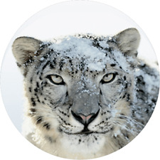 Mac OS X 10.6 Snow Leopard DMG - Instant Delivery DOWNLOAD