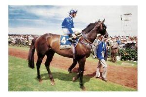 AT TALAQ just won 1986 Melbourne Cup modern Digital Photo Postcard