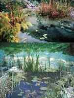 Wassersterne Gartenteichdekoration Teichdeko Schwimmpflanzen für den Teich Deko
