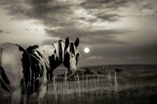 WILD HORSE UNDER FULL MOON * QUALITY CANVAS PRINT