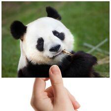 "Panda Bear Forest Bamboo - Small Photograph 6"" x 4"" Art Print Photo Gift #14592"