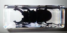 Longhorn Ghost Stag Beetle Odontolabis siva Specimen in Clear Lucite Block BK3