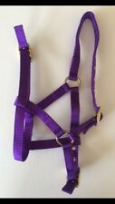 Foal Headcollar, PURPLE, Nylon Brass, Foal, Mini, Shetland, FREE UK Postage