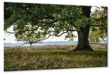 Leinwand Bild Leinwand Bild Lünburger Heide Eiche Baum Heidekraut Blätter Grün