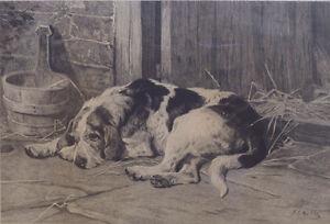 Otterhound Otter Hound Foxhound Hunting Dog Art Engraving 1882 signed J S Noble