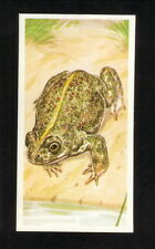 Natterjack Toad--1990 Brooke Bond British Tea Card