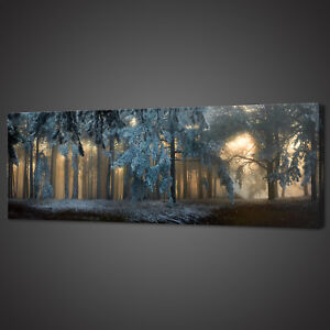 SUNRAYS FOGGY FOREST PANORAMIC CANVAS PRINT PICTURE WALL ART VARIETY OF SIZES